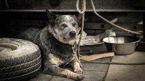 dog-1426490_960_720
