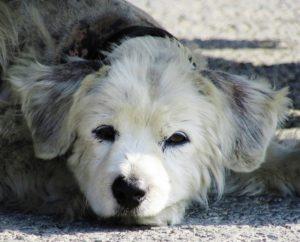 dog-1486660_960_720