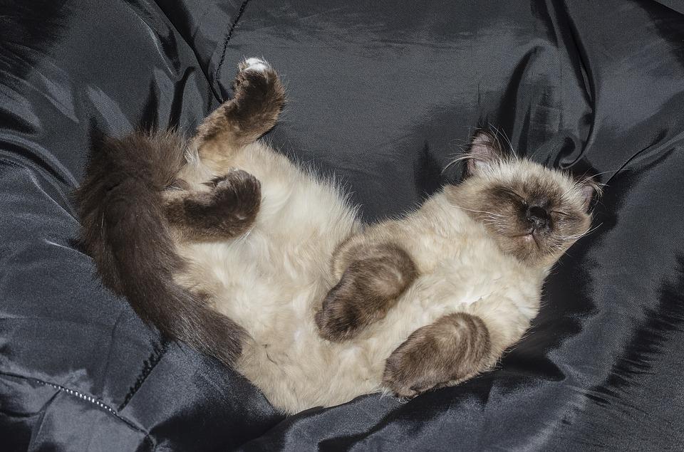 gato morde