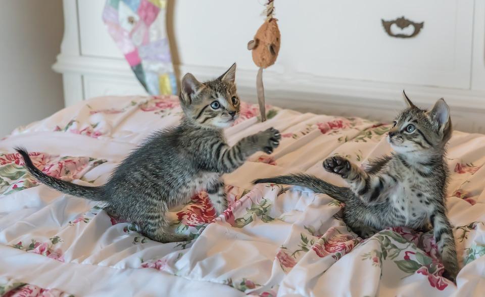 gatos têm medo de pepino