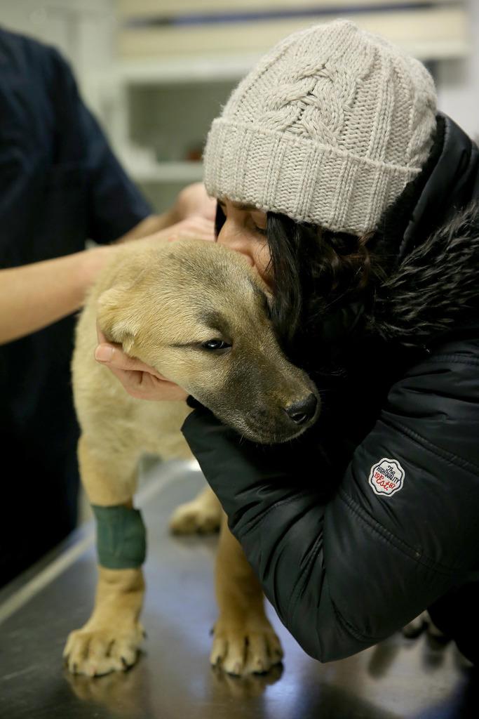 resgate de um cachorro