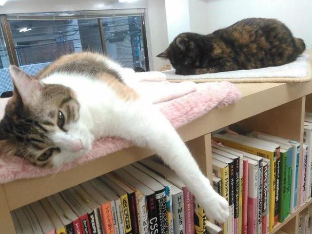 gatos para diminuir stress