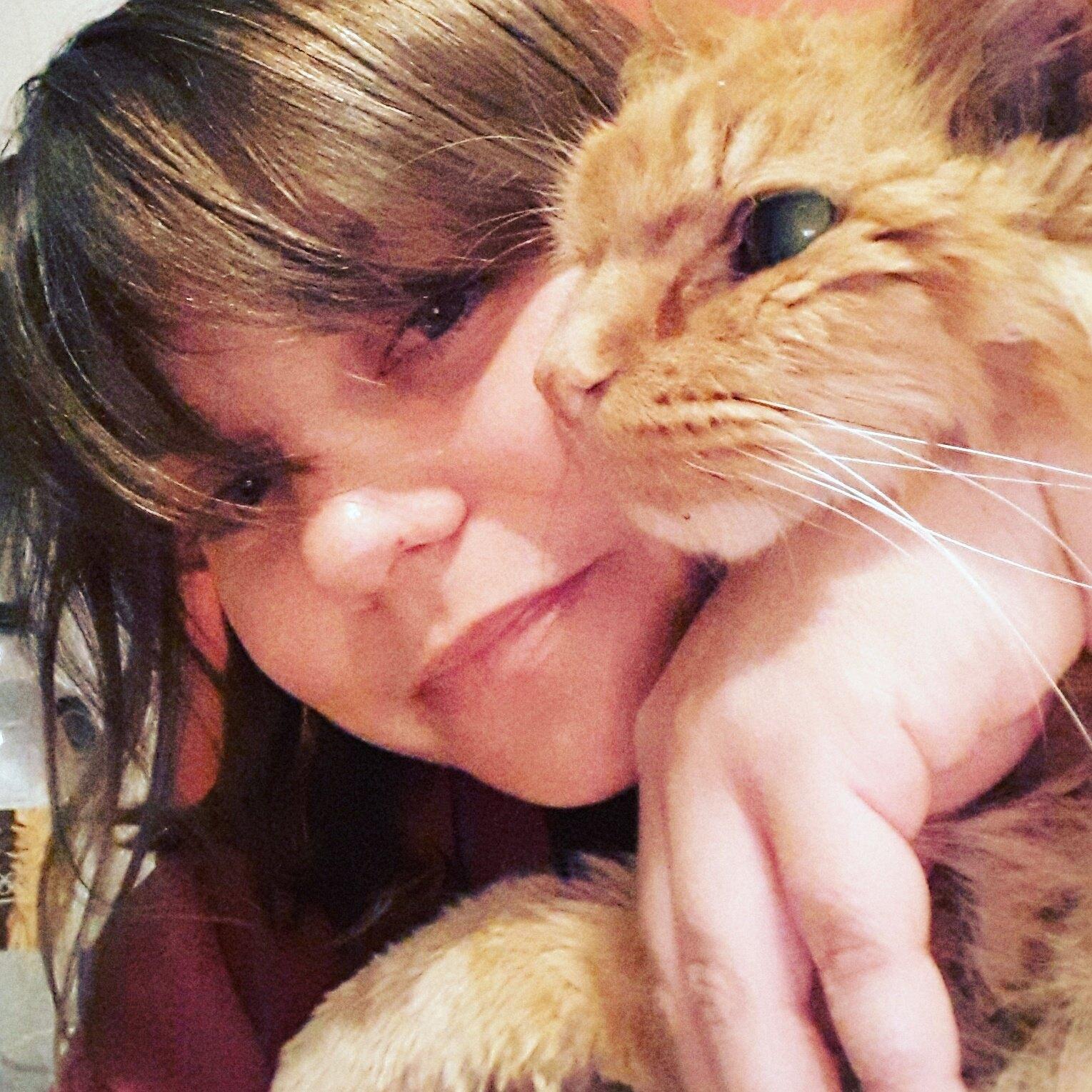 doença renal em gatos