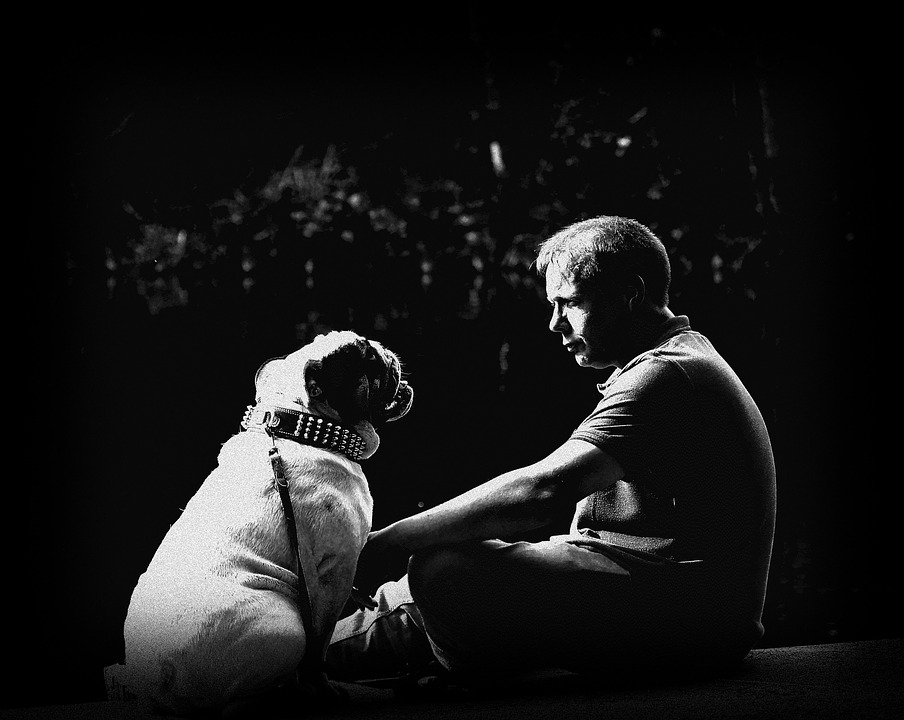 medo do veterinário