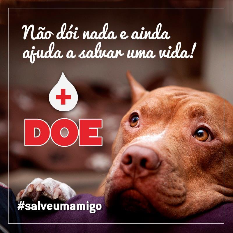 doação de sangue animal