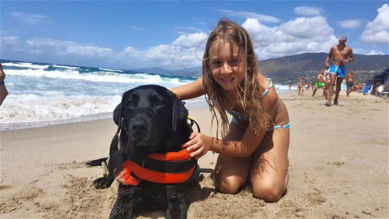 cachorro salva-vidas