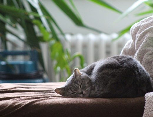 gato sozinho em casa