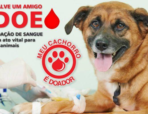 doação der sangue animal