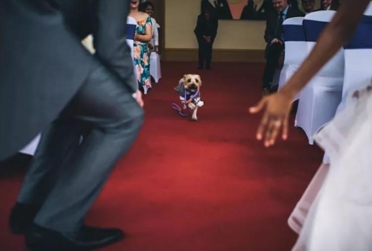 cachorro carrega as alianças