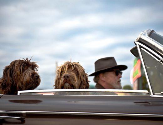 viajar de carro com seu pet