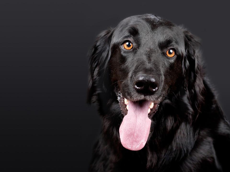 saúde do seu cachorro