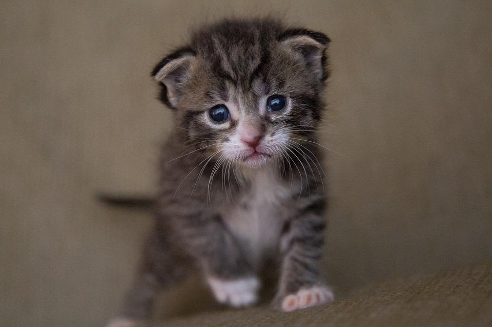 idade humana de um gato