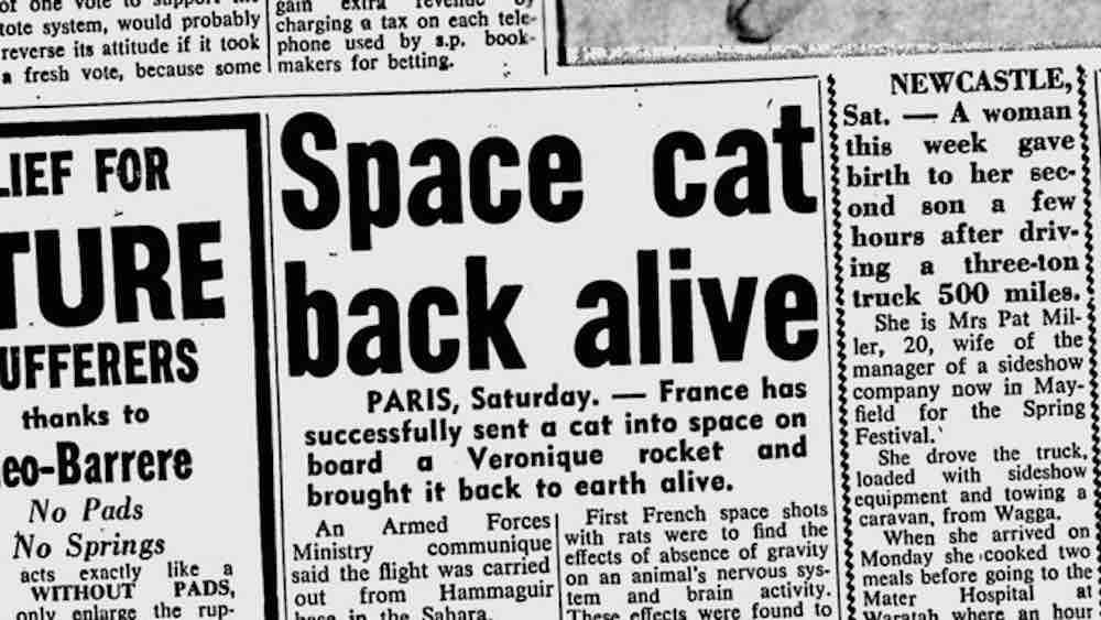 primeiro gato a ir ao espaço